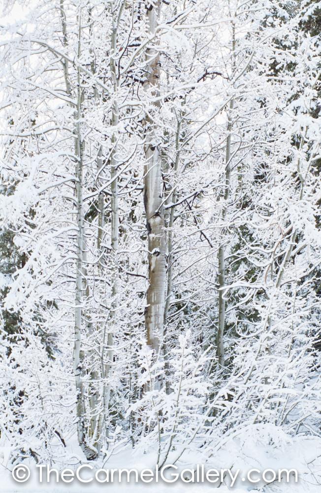 Winter Aspen