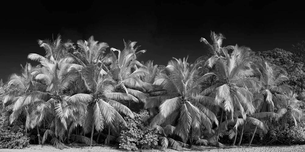 Gibney Beach Photography Art | DE LA Gallery