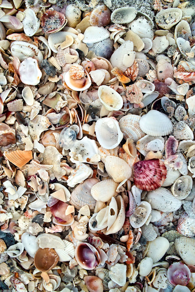 Sea Shells at la Captiva