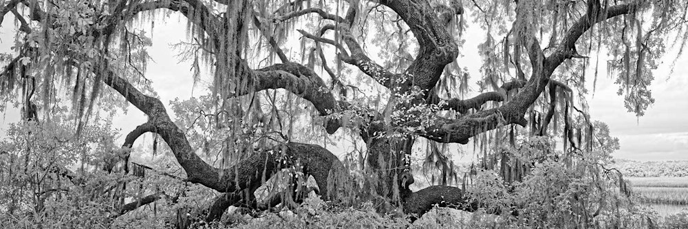 Botany Bay Oak Photography Art | DE LA Gallery