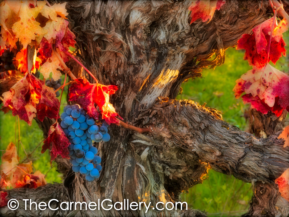 Autumn Harvest Ii Art | The Carmel Gallery