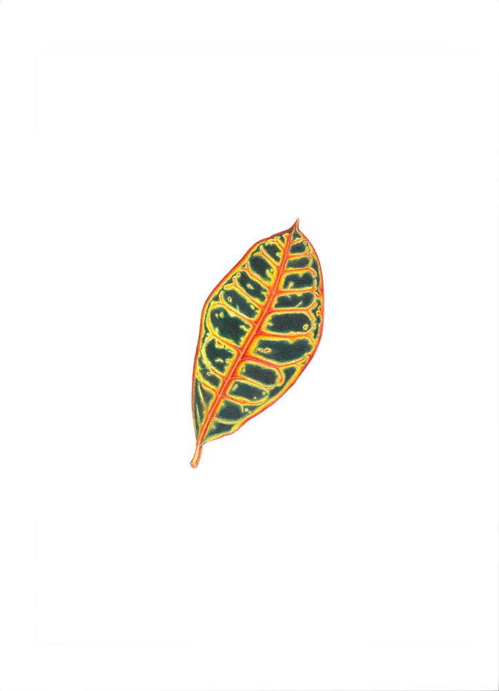 Croton Leaf