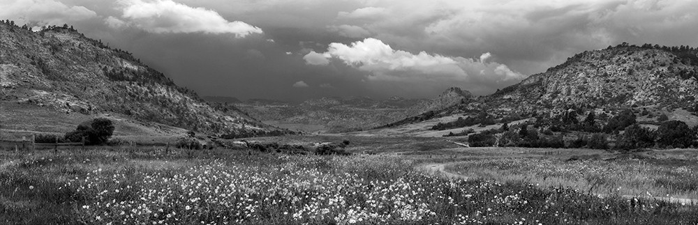 Wildfower Meadow, Northern Colorado - bw