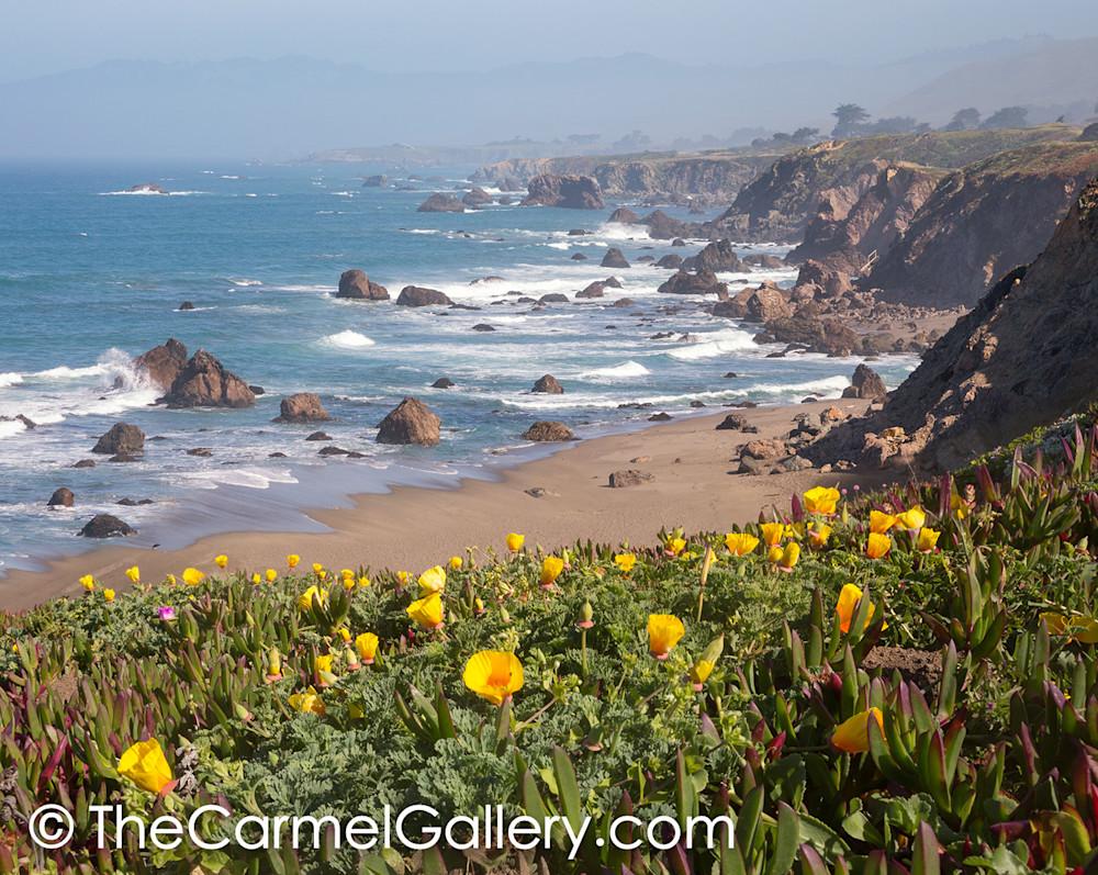 California Poppies Sonoma Coast