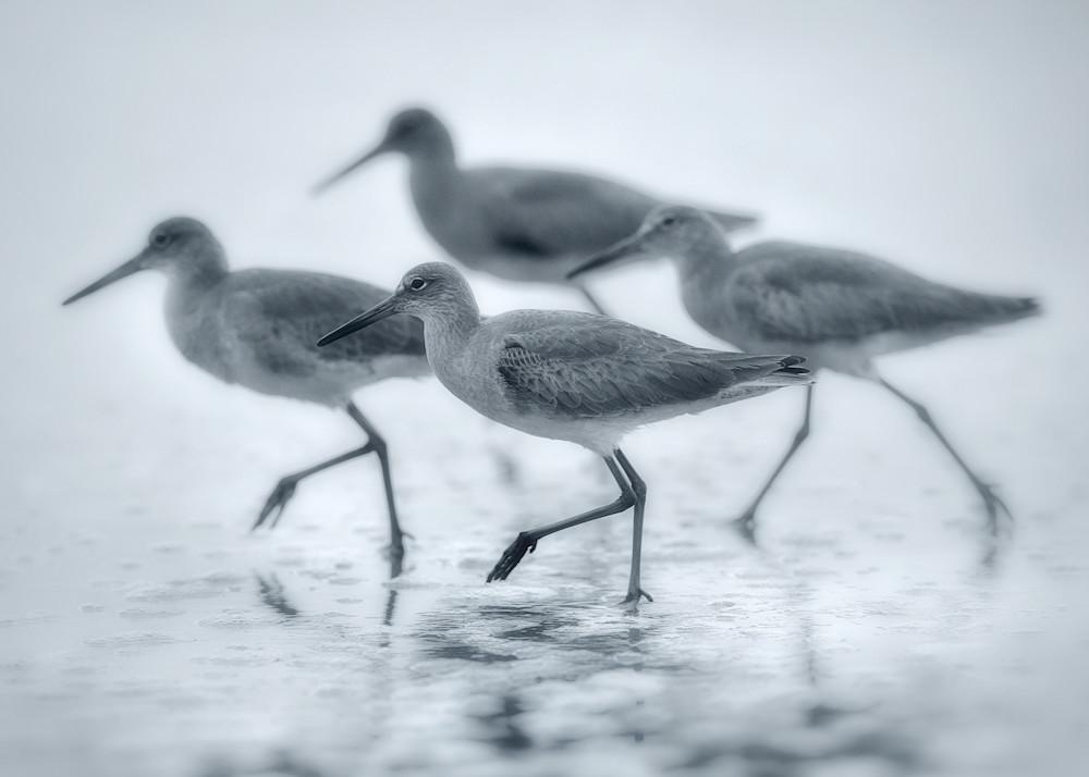 Shore Dance