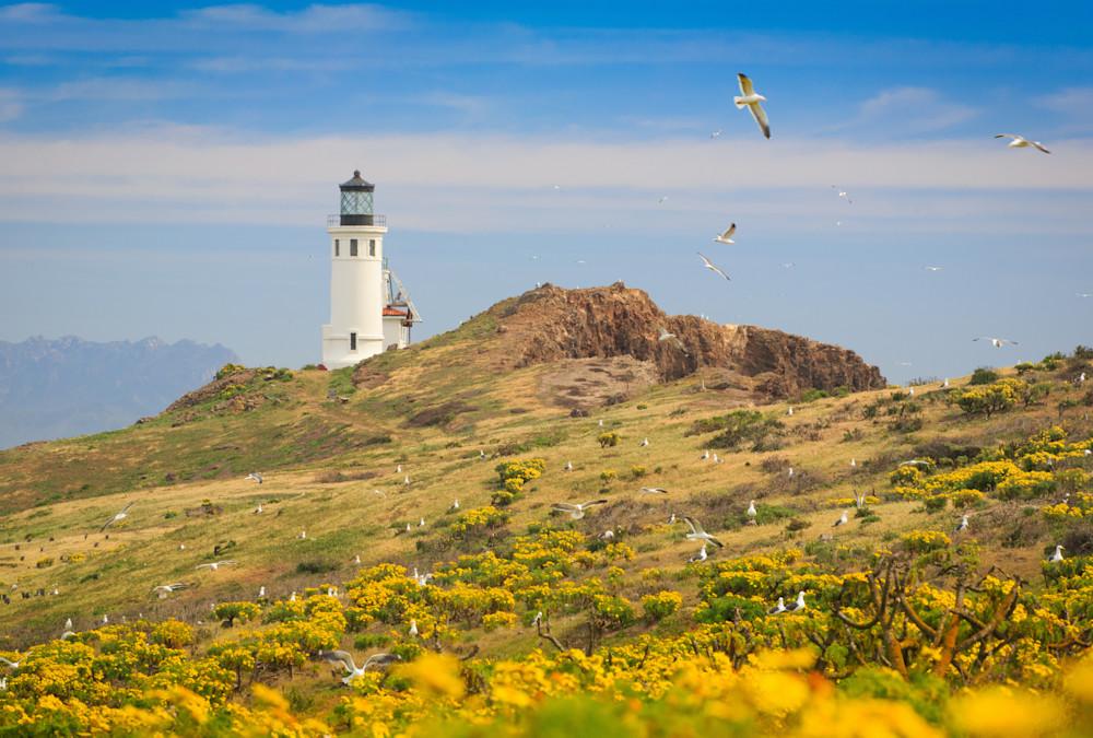 """Springtime at Anacapa Lighthouse"""