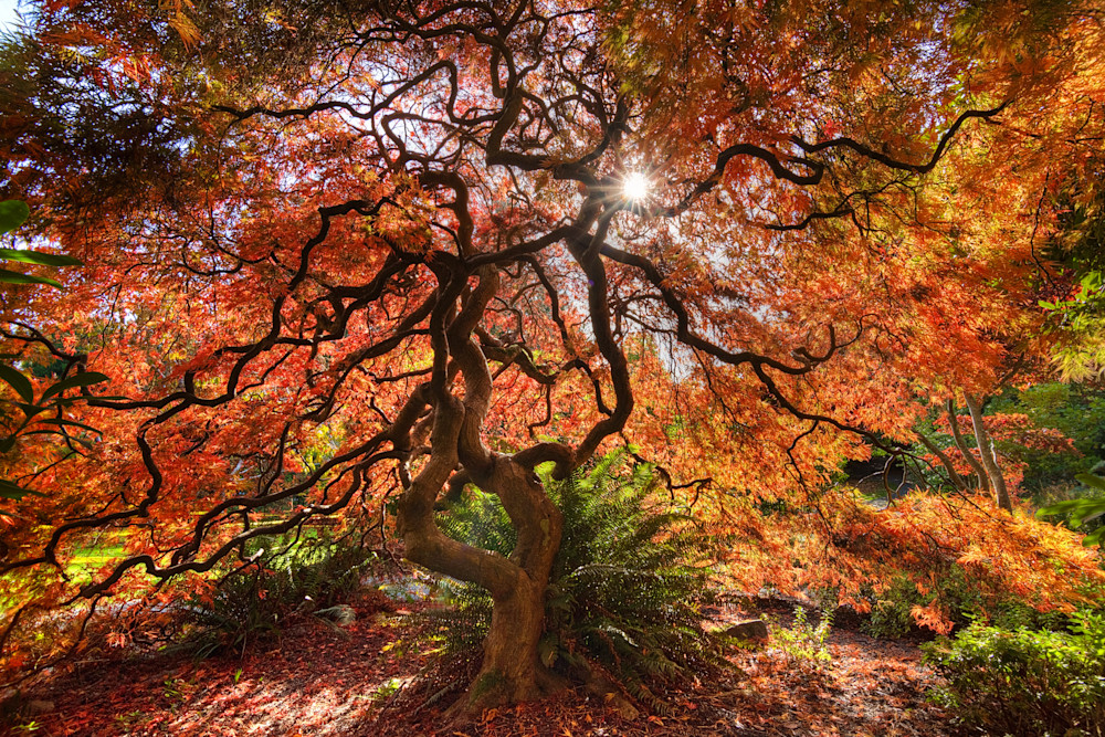 Tree of Fire Photograph for Sale as Fine Art.