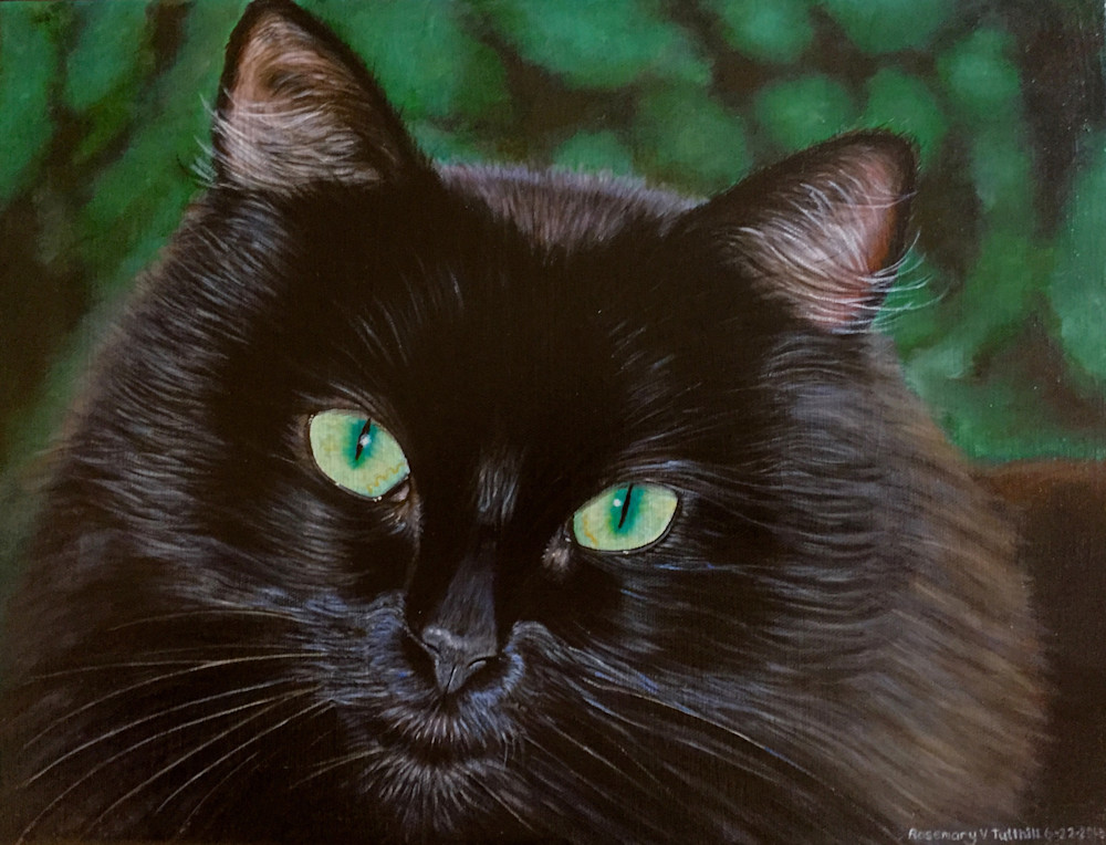 C-dub the Black Cat