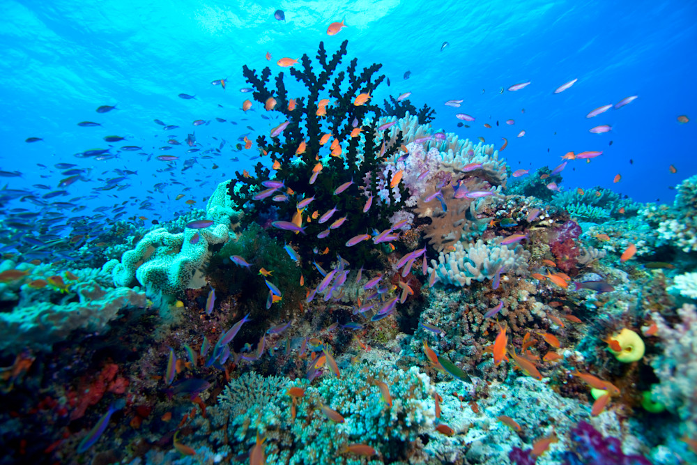 Photograph of underwater coral reef, Fiji