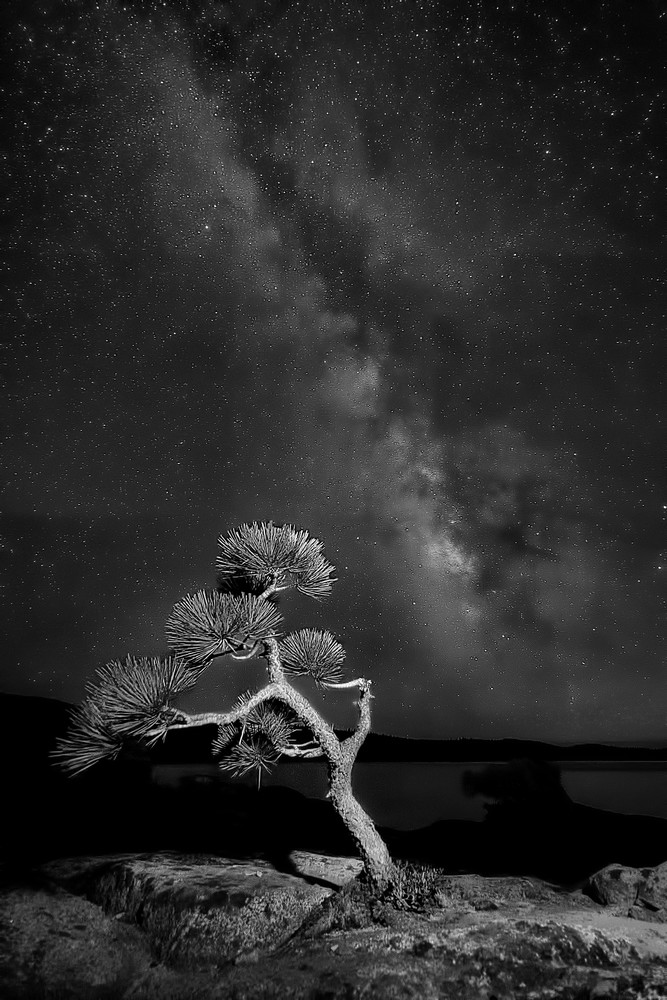 Loon Lake Bonsai and Milky Way B&W
