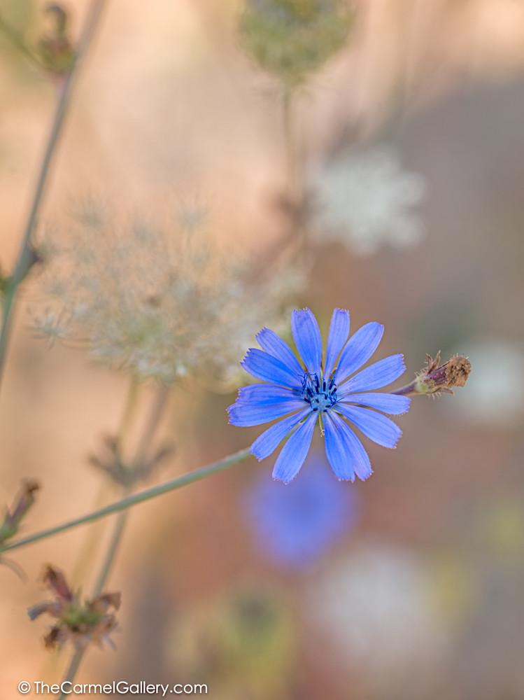 Summer Meadow V