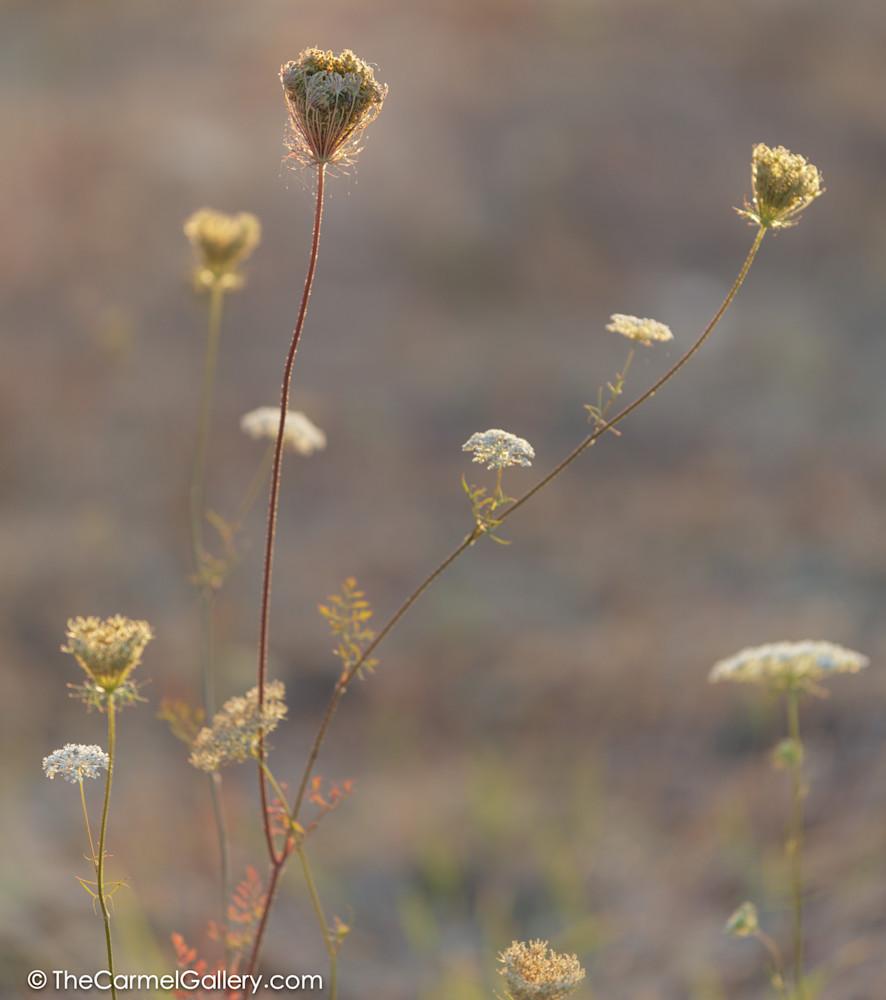Simmer Meadow VI