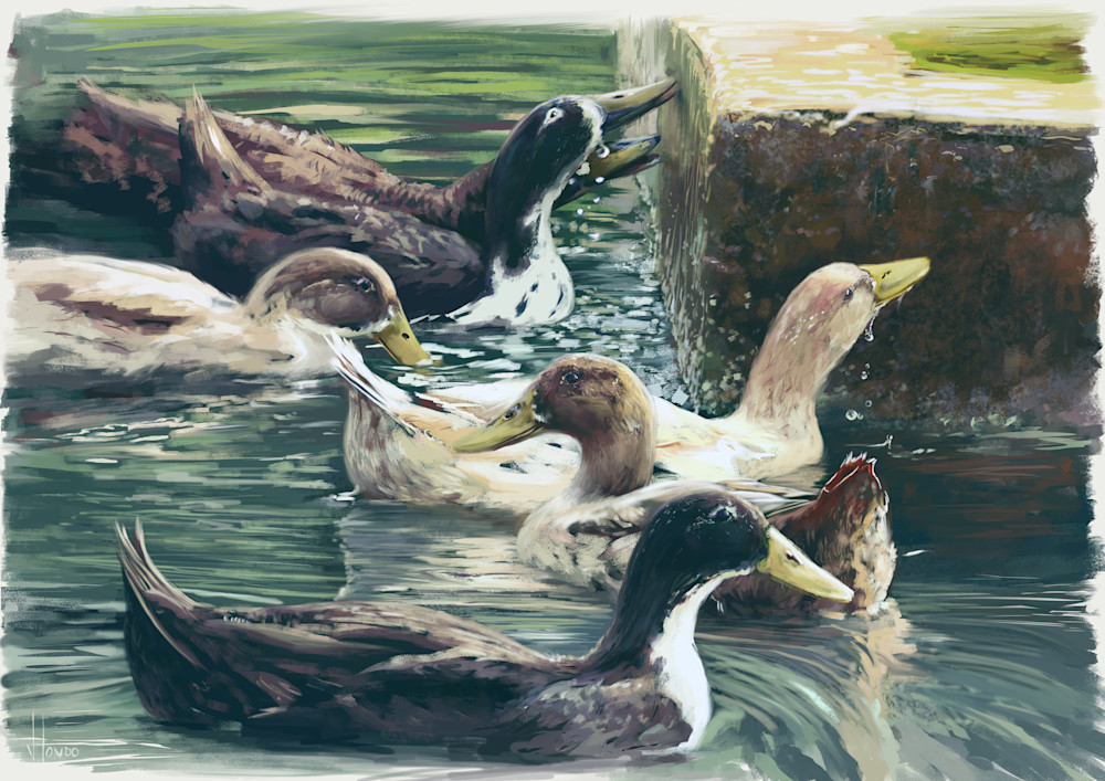 Splashing Ducks: Fine Art Print by Hondo Branson.