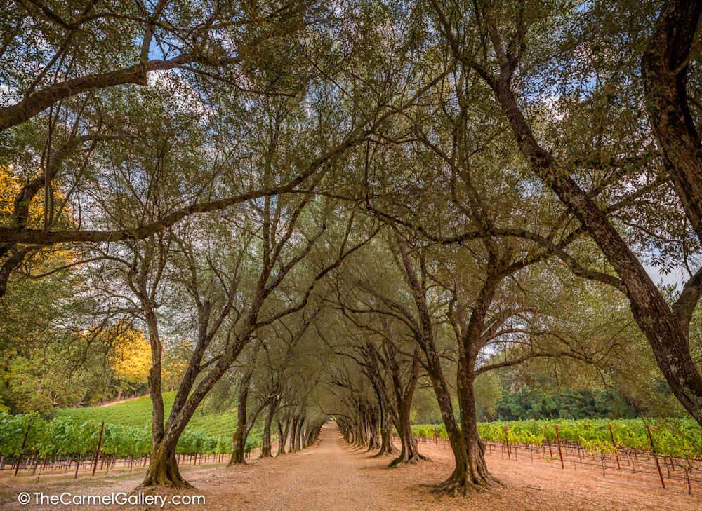 Wine Country Passage