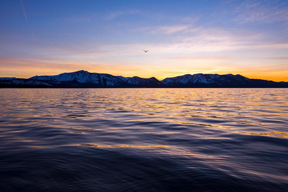 Seagul Over Tallac Photography Art | Brad Scott Visuals