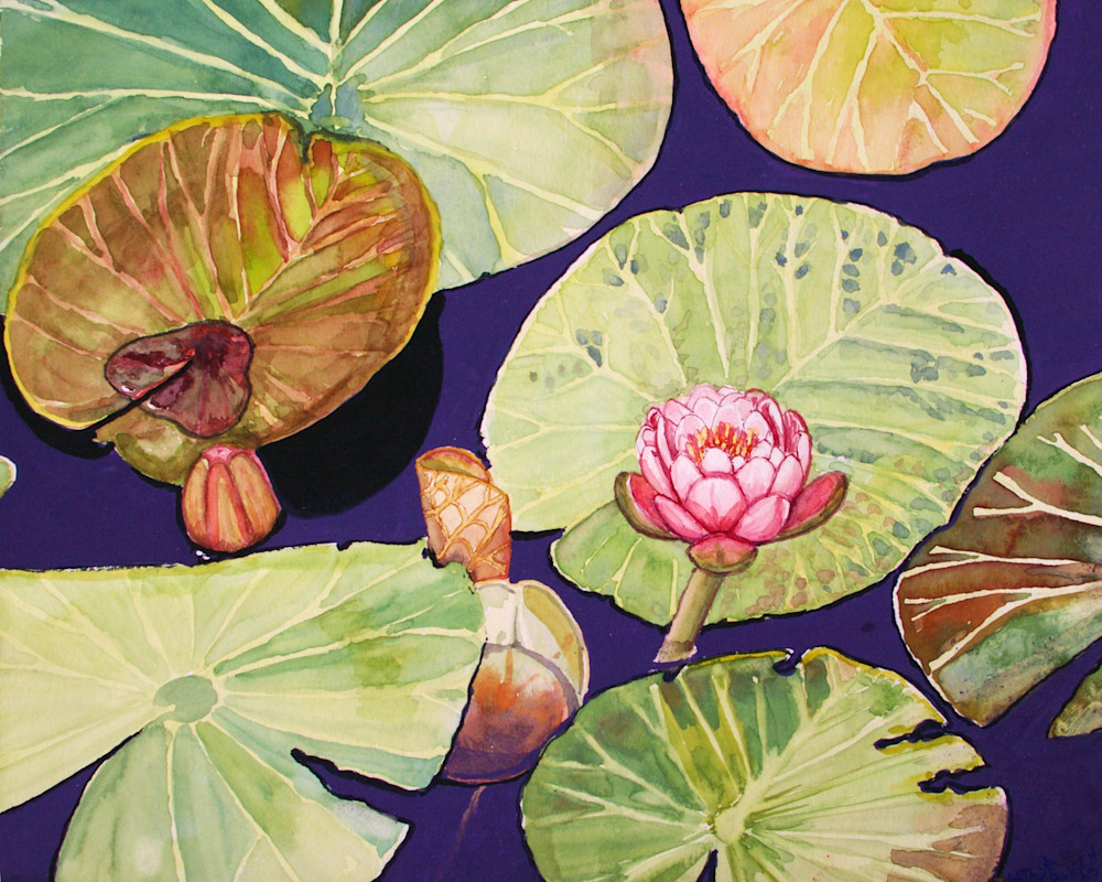 Emerging Water Lily Art for Sale