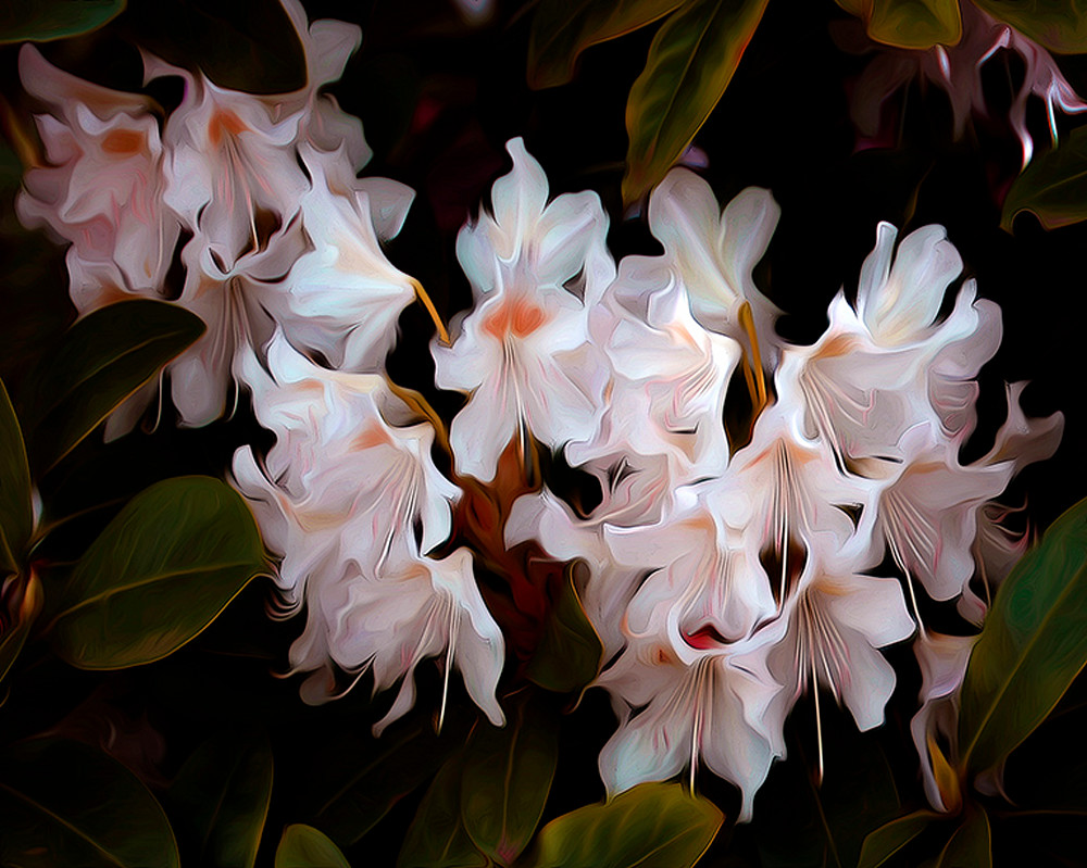 Hiding Rhododendrons art photograph by Arthur Jacob