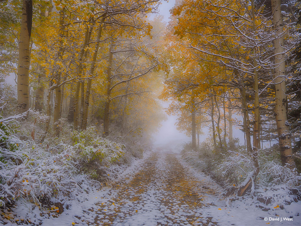 Near Autumn's End