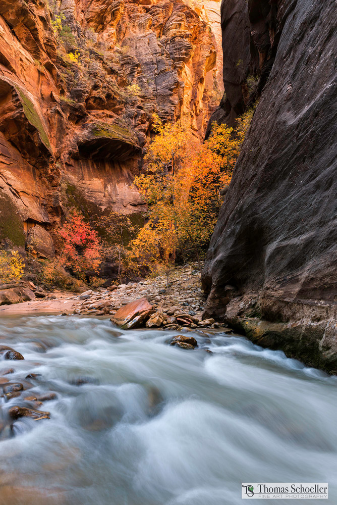 Autumn arrives in the Virgin River Narrows of Zion National Park/Fine art prints available by Thomas Schoeller