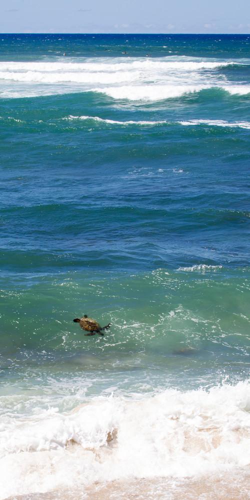 turtle, surfing, Hawaii, ocean