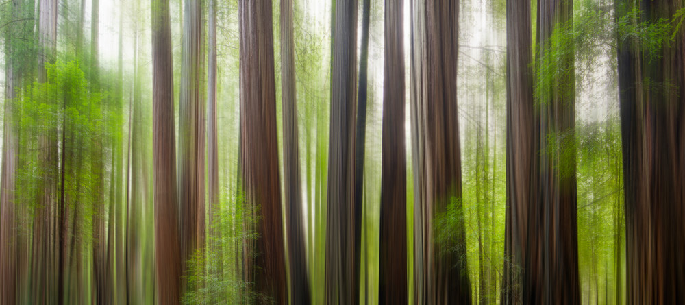Redwood Forest Fine Art Abstract Print
