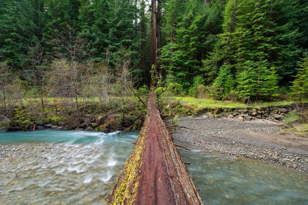Tree Bridge, Humbolt Redwoods Fine Art Print by Brad Scott