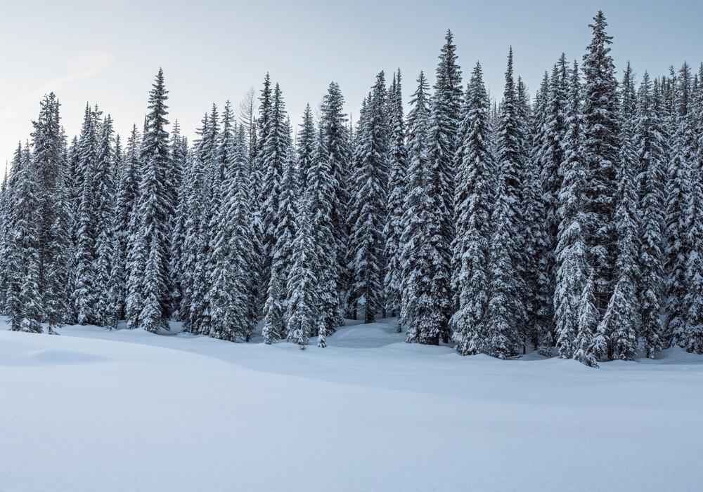 Lolo Pass Snowy Trees Fine Art Photography Print