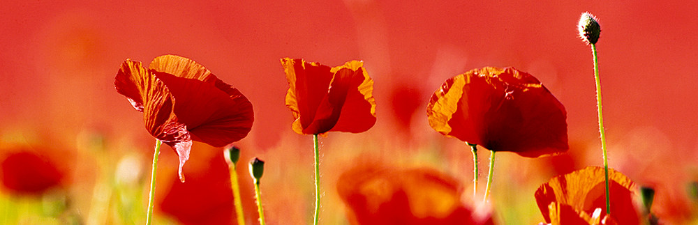 Flowers And Plants 005 Photography Art   Cheng Yan Studio
