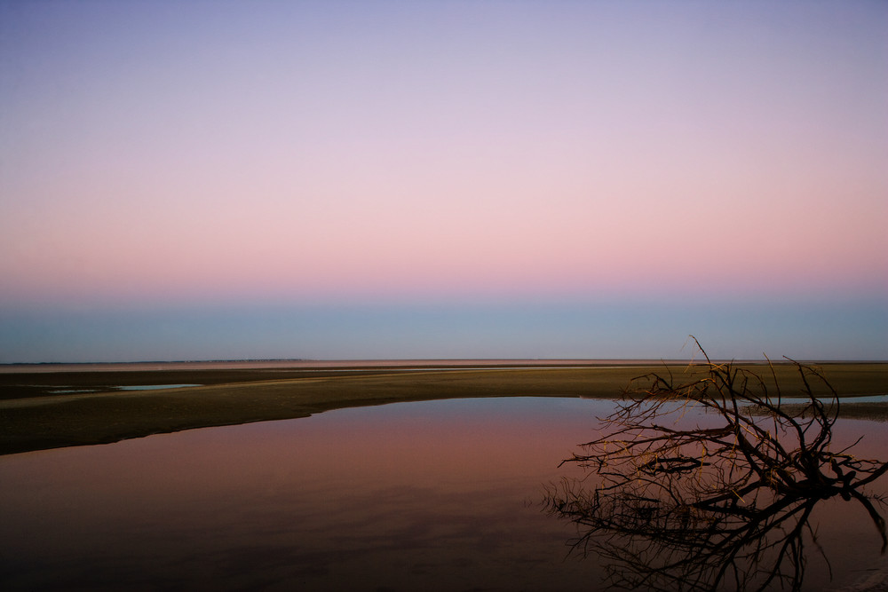 sunset drift tree beach art print
