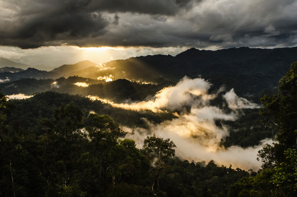 The Last Rainforest of Borneo - Photography by Varial