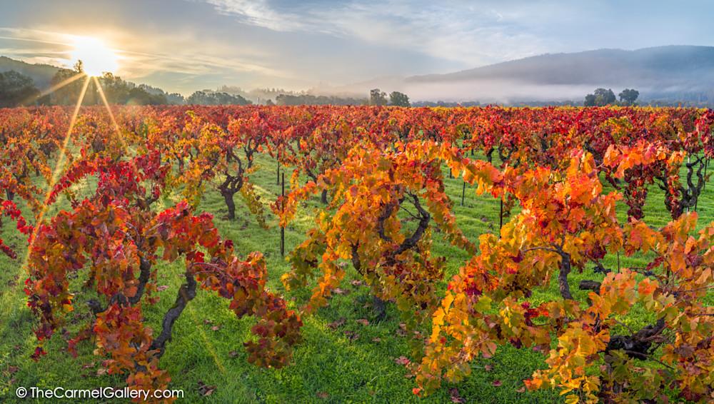 Autumn Sun, Napa Valley