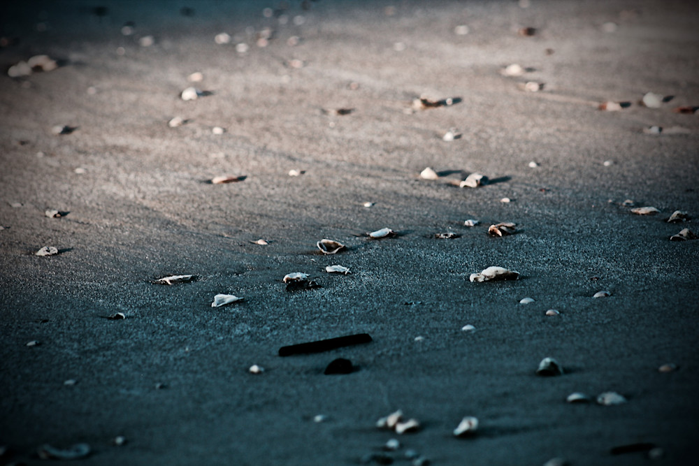 Seashells and Sand-BRSouth georgia, golden islands, sand, wall-art, fine-art, prints