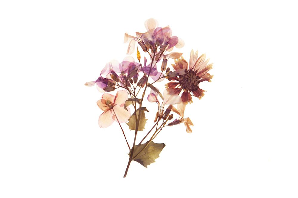 Harriet's Flowers No.4