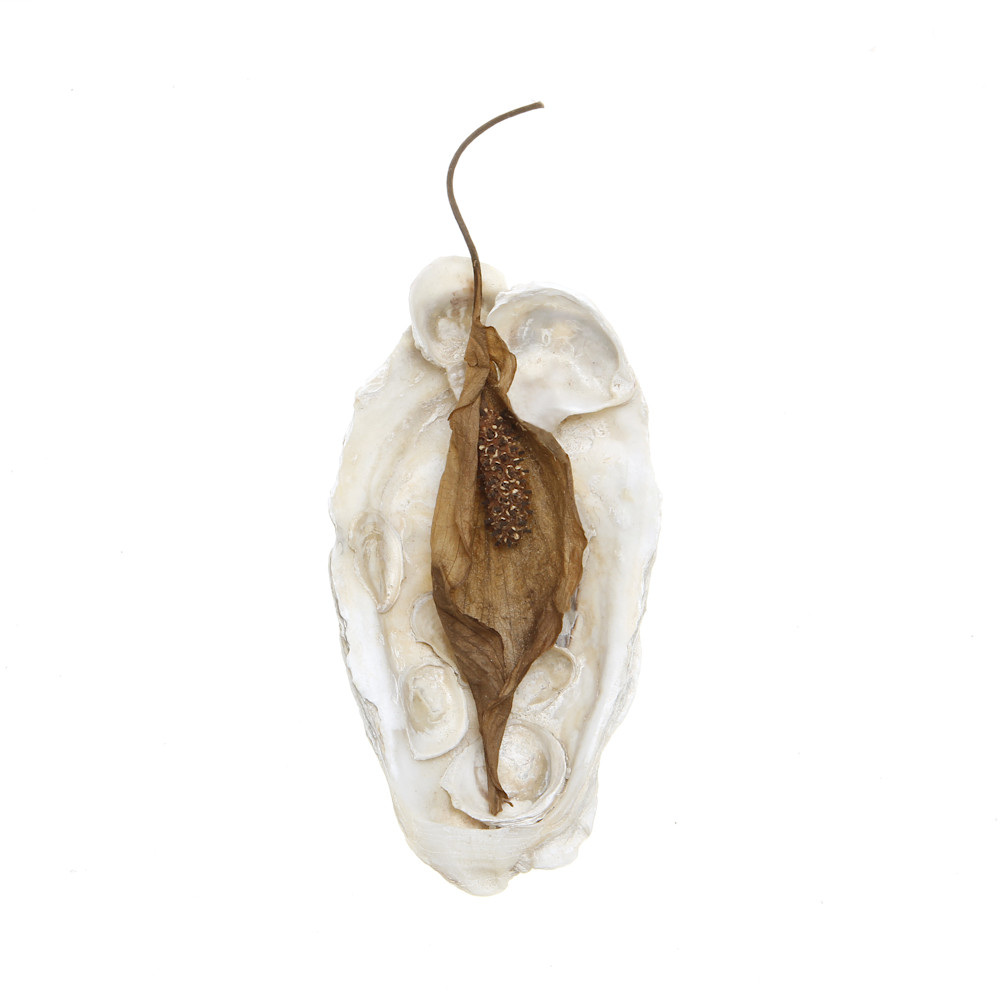 Oyster Shell and Leaf