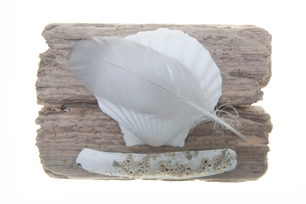 Feather, Shells and Driftwood