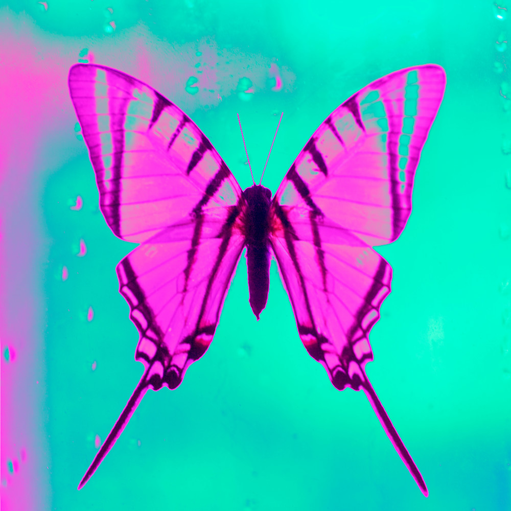 butterfly no.29