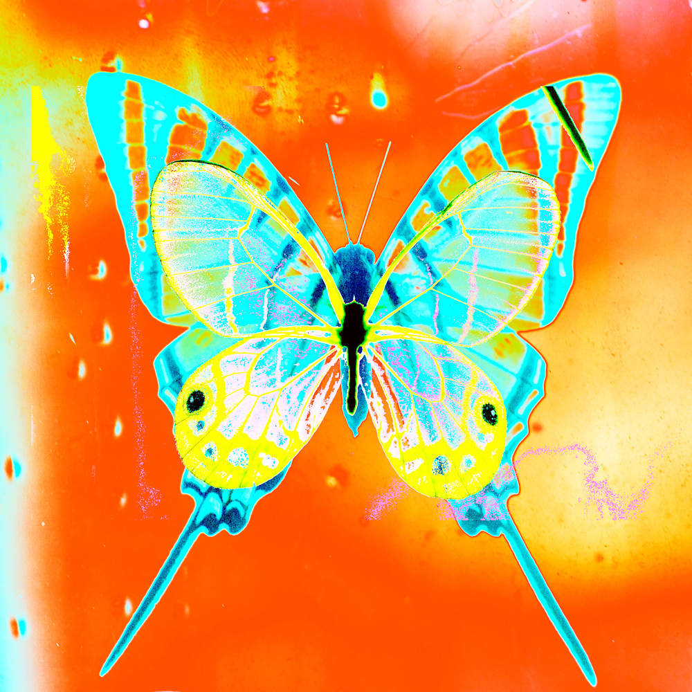 Butterfly No.31