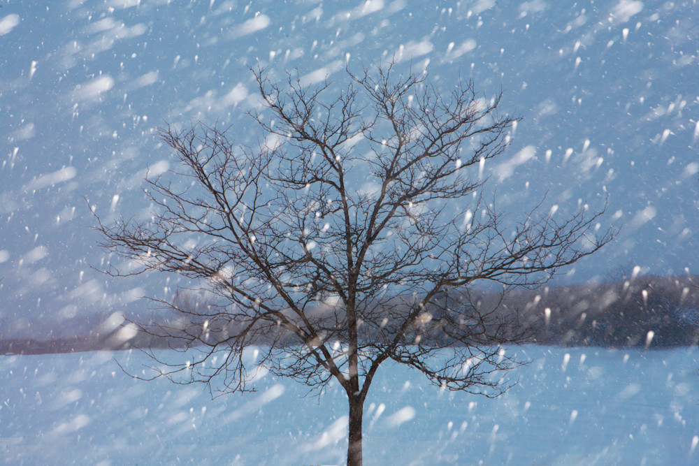 Tree in Blizzard
