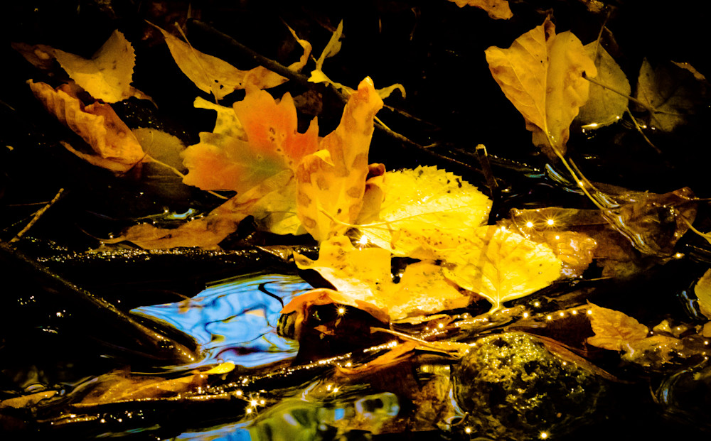 AutumnSuncatchers-BSouth, Autumn, yellow, leaves, stream, water
