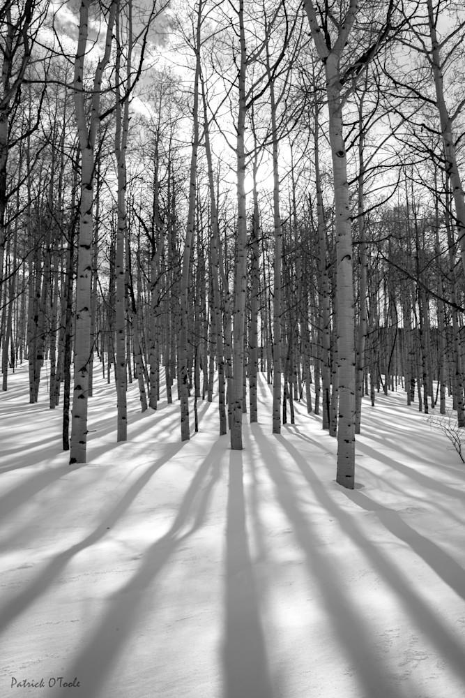 Aspen Shadows Photography Art | Patrick O'Toole Photography, LLC