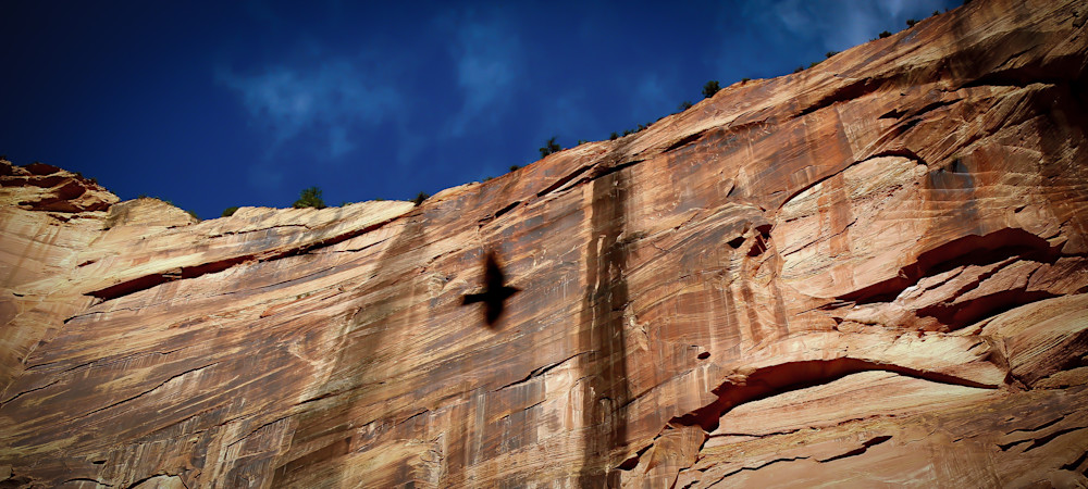 Spirit Animal-BSouth, Zion-National-Park, shadow, red-rock
