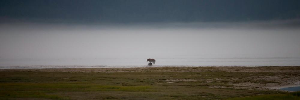 bears in the mist, bears, Alaska
