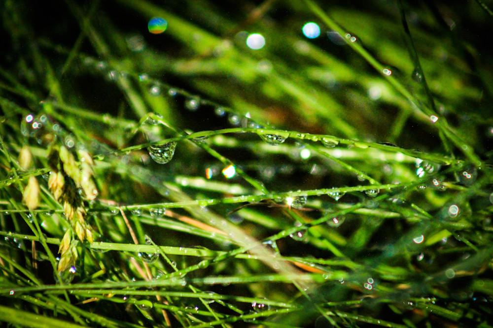 Sunriver Dewdrops-BSouth, Oregon, Sunriver-resort