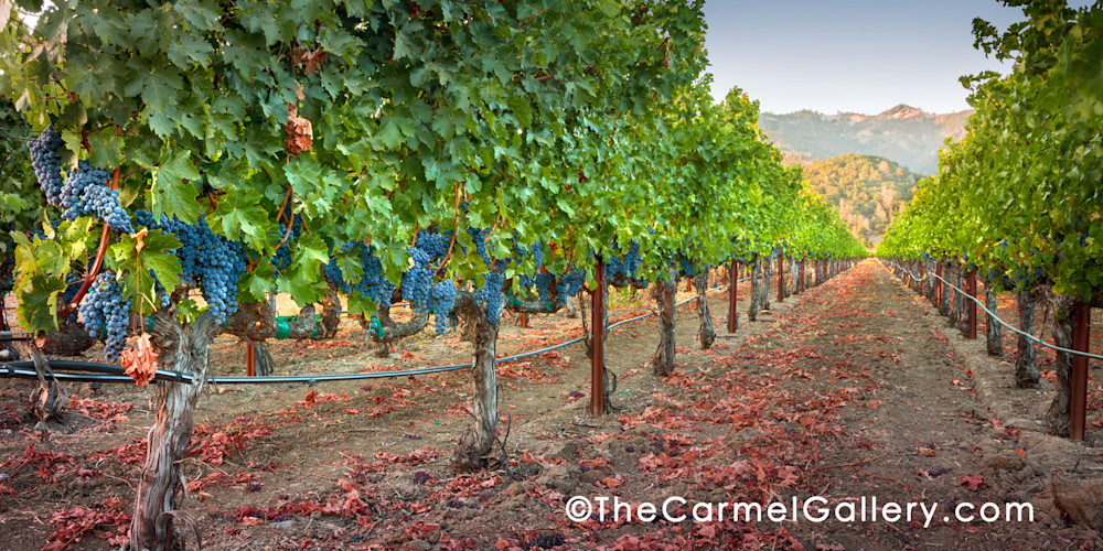Cabernet Calistoga I Art | The Carmel Gallery
