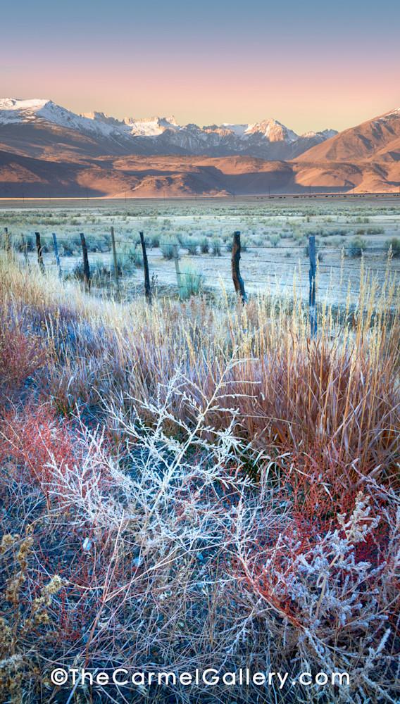 Autumn Frost Eastern Sierra Art | The Carmel Gallery