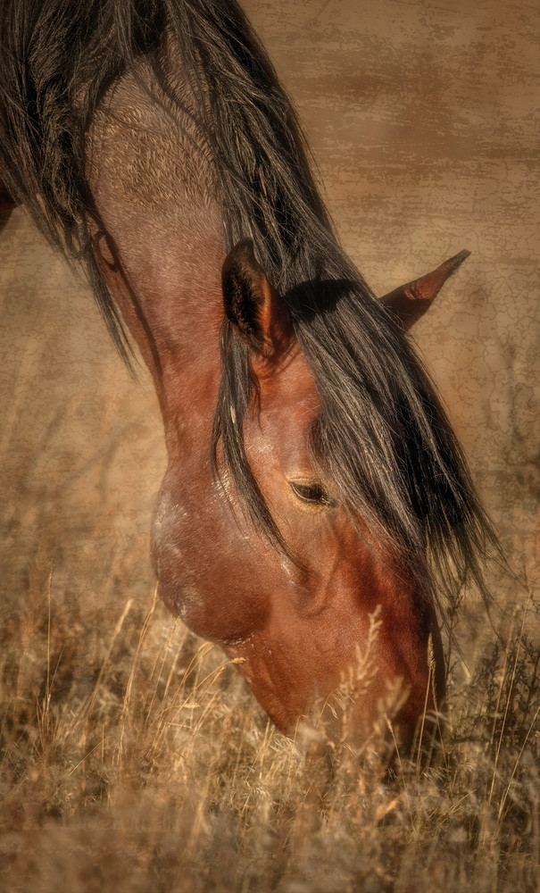 Extensions  (2) Photography Art | JL Grief Fine Art Photography