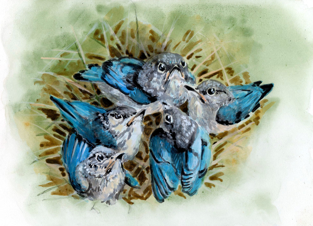 Clutch is fine art animal acrylic painting of young bluebirds created by artist Wayne Chunat.