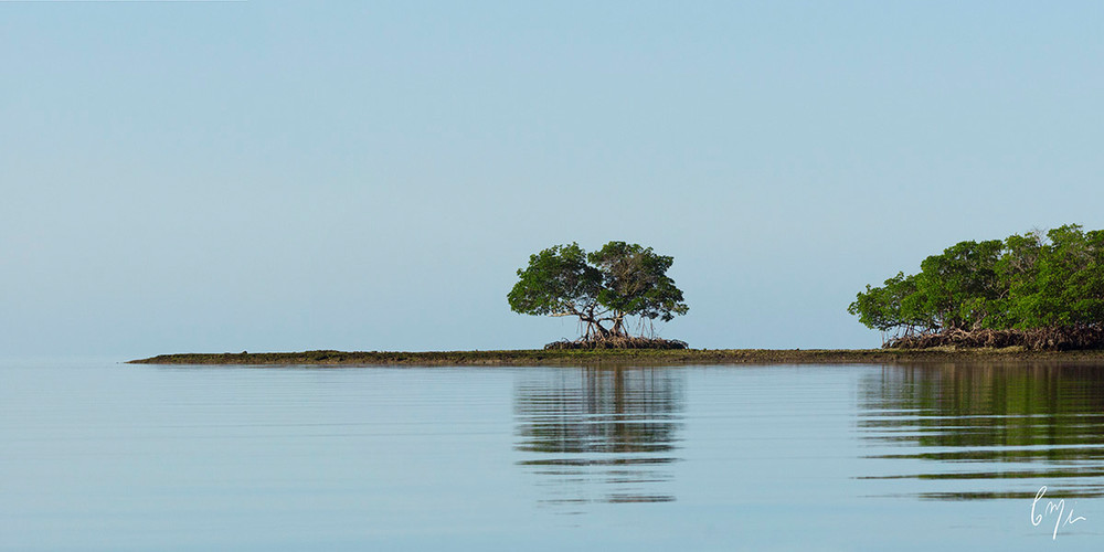 Photograph from a canoe in the gulf waters of Everglades National Park, Florida