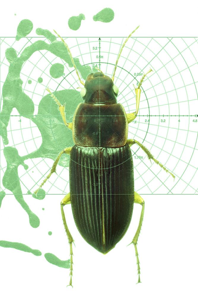 Beetle No.3