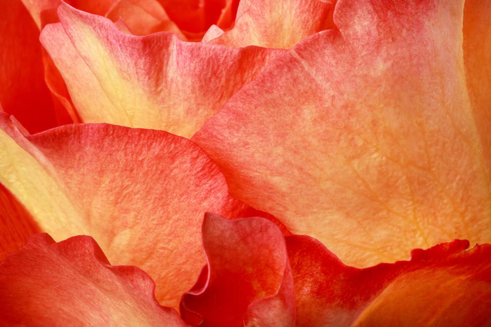 Fire Photograph of a Flower in Bloom | Susan Michal Fine Art